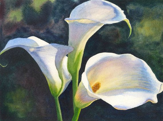 Calla Lilies Watercolor Painting Print by Cathy Hillegas ...