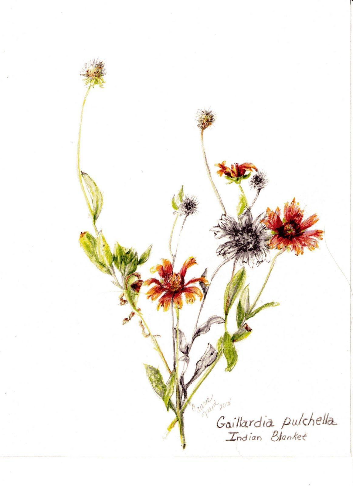 Botanical flower ink google 검색 flower pinterest botanical