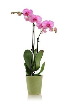 Photo of Everything You Need to Know About Orchid Care