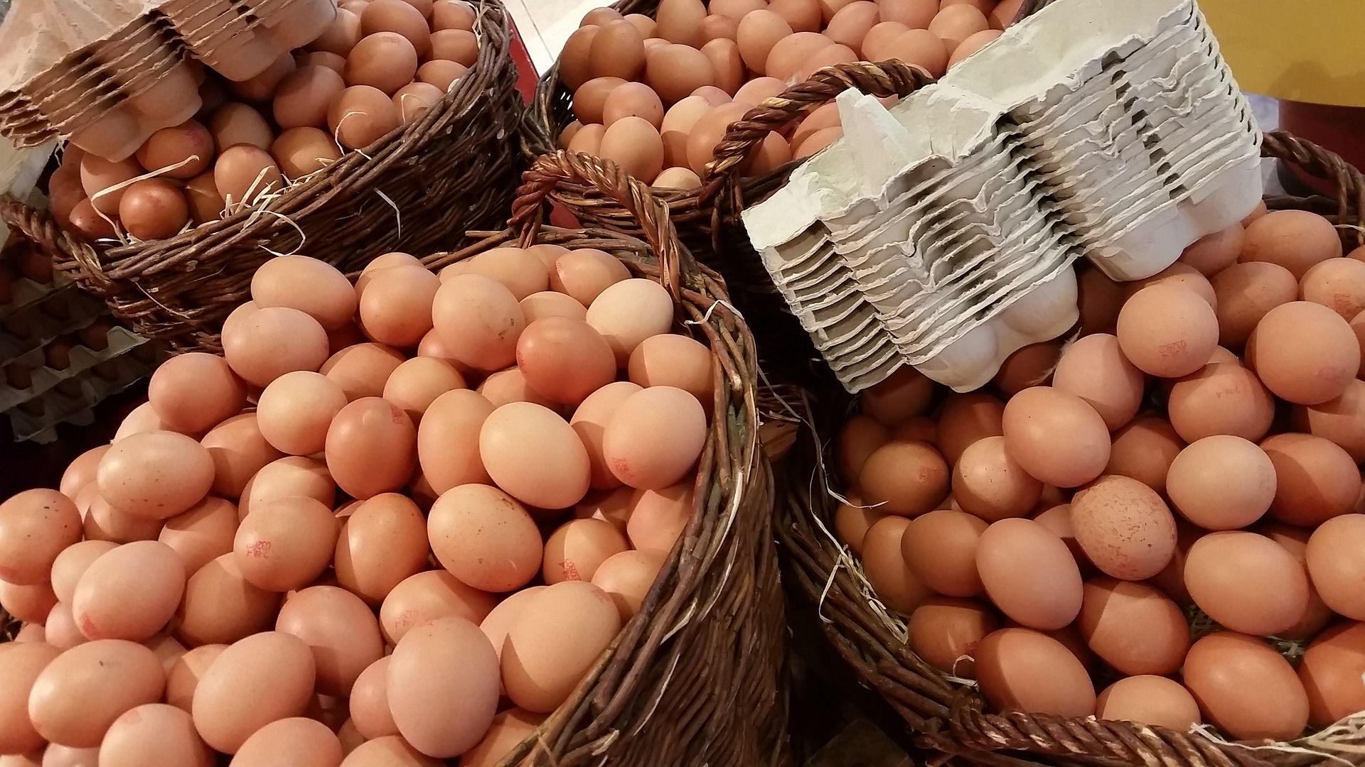 Kreative Dinge mit Eierkartons herstellen - 5 DIY Ideen, perfekt für ...