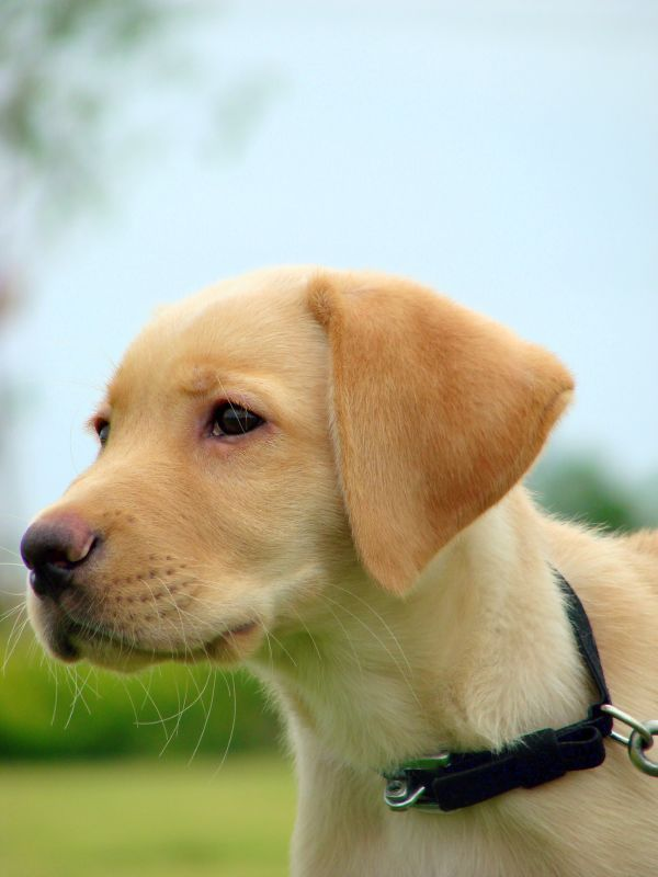 Top 30 Most Cutest Dogs Pictures Most Cutest Dog