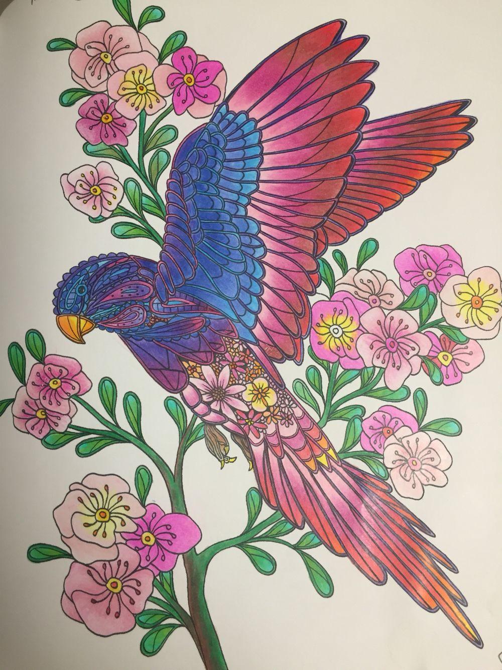 Birds Coloring Book By Georgie Woolridge Rose Ringed Parakeet