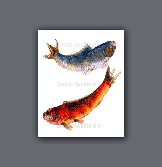 Chinese Home Decor Koi Gold Fish Wall Art By GnosisSeaLifeArt