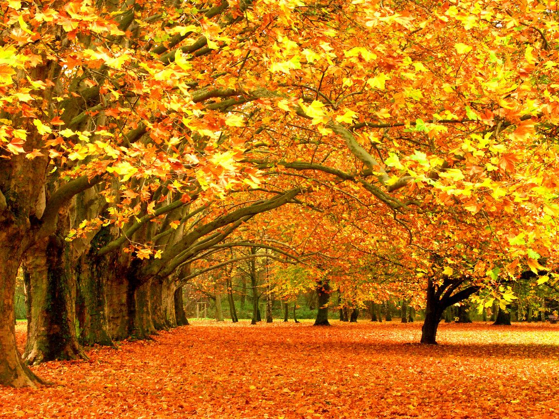 Осень - Картинка на телефон / Обои на рабочий стол №706676 ...
