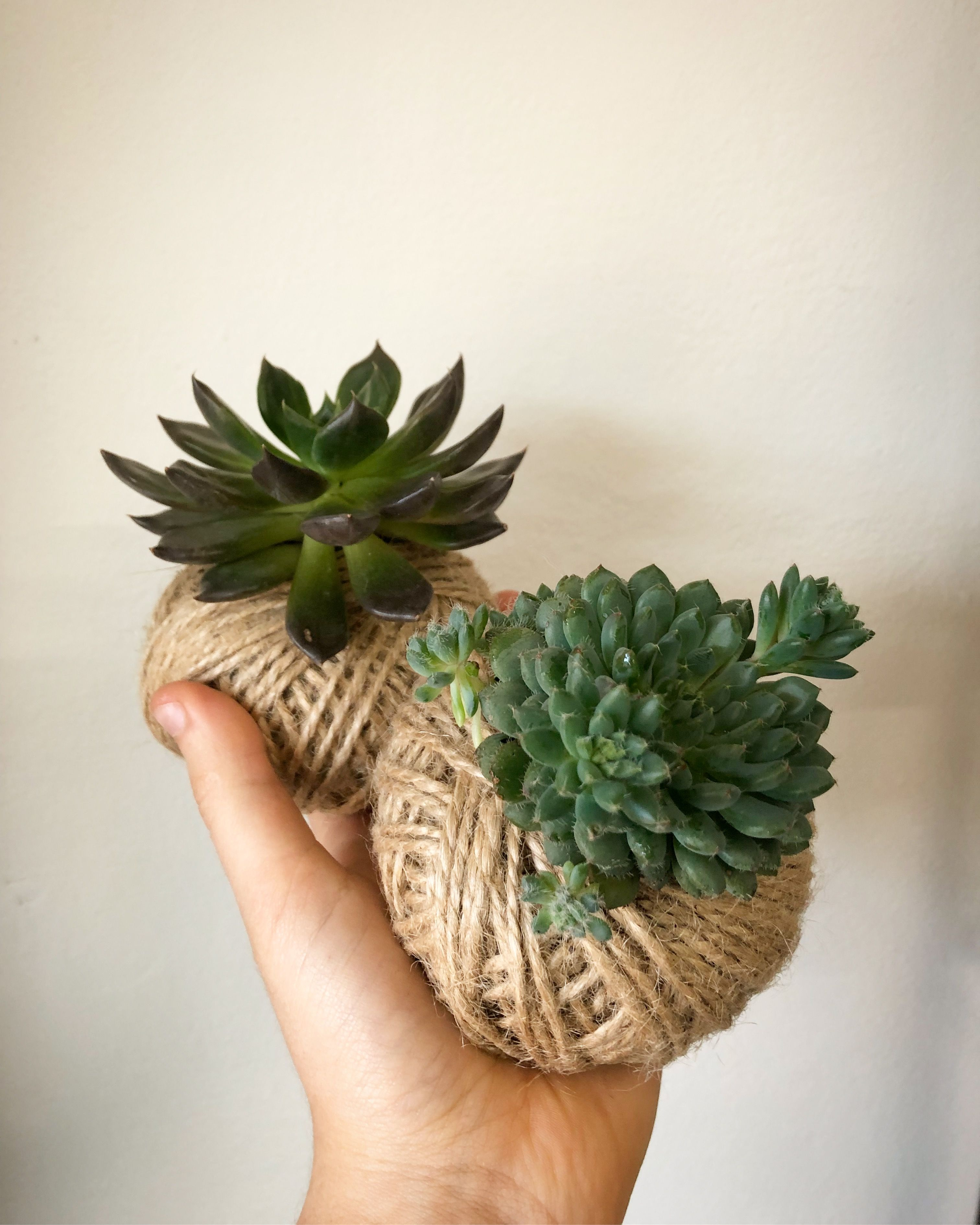 little succulent kokedamas Succulents, Planter pots, Plants