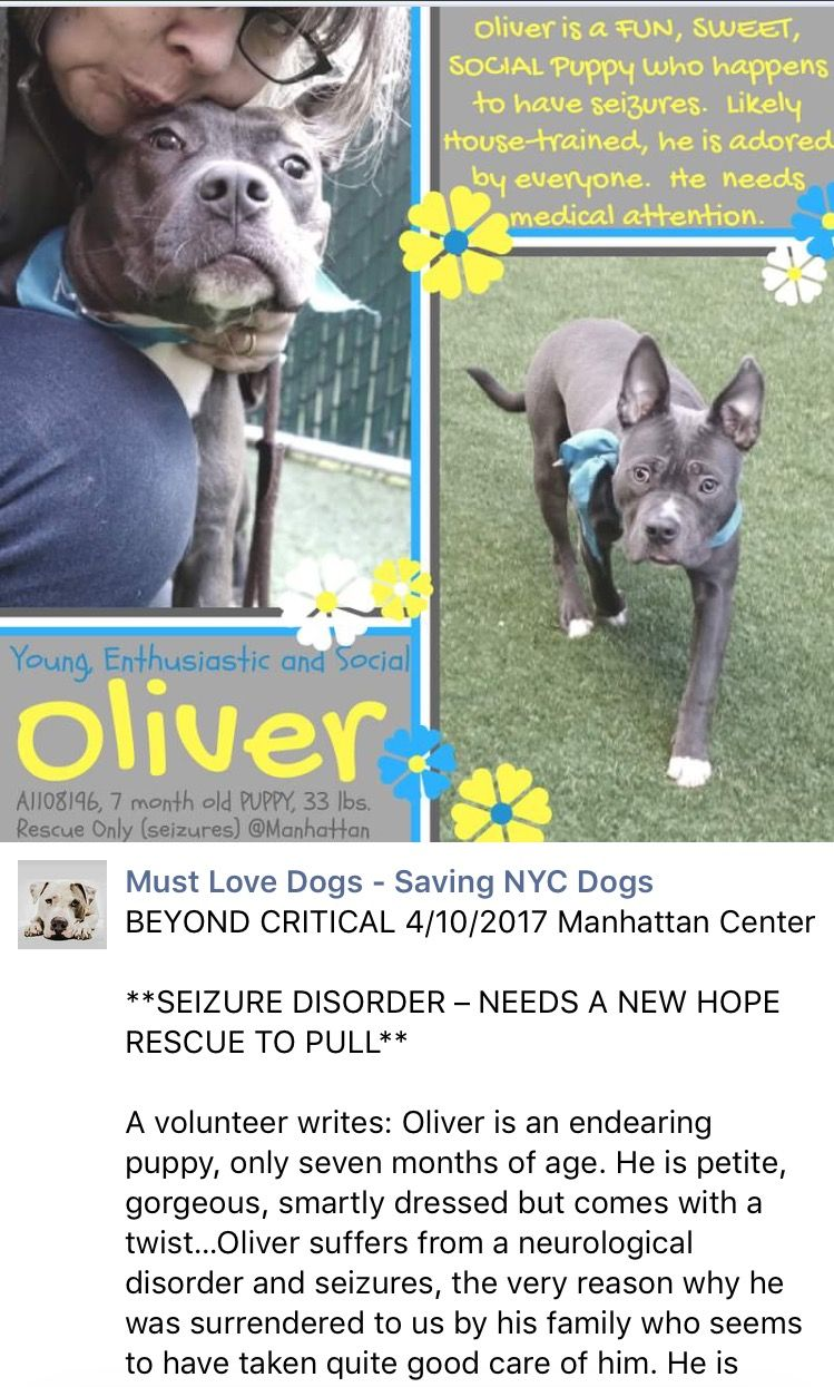 5 3 17 Oliver Has Passed Away Rest In Paradise Little Brave Precious Angel I Was So Much Hoping For A Miracle Love I Nyc Dogs Animals My Animal
