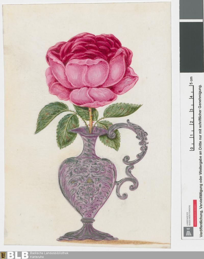 Karlsruher Tulpenbucher Karlsruhe 3301 Und 3302 Gla Karlsruhe Hfk Hs Nr 263 Band 4 Gla Karlsruhe Botanische Illustration Handschrift Karlsruhe
