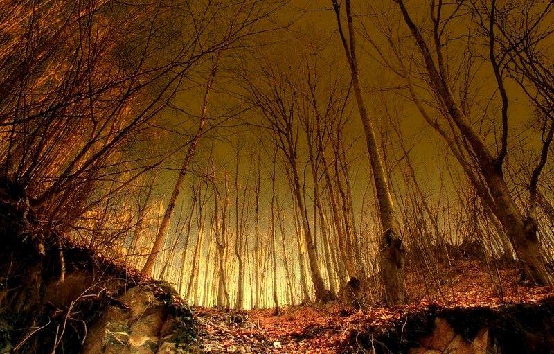 Trees by ~MaraDamian