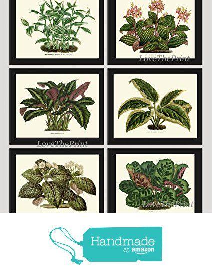 House Plant Print Set of 6 Antique Botanical Art Illustration Beautiful Green Leaf Blooming Flowers Nature Home Room Decor Wall Art Unframed HO from LoveThePrint https://www.amazon.com/dp/B01LWELKMT/ref=hnd_sw_r_pi_dp_dMvbyb7KDB22M #handmadeatamazon