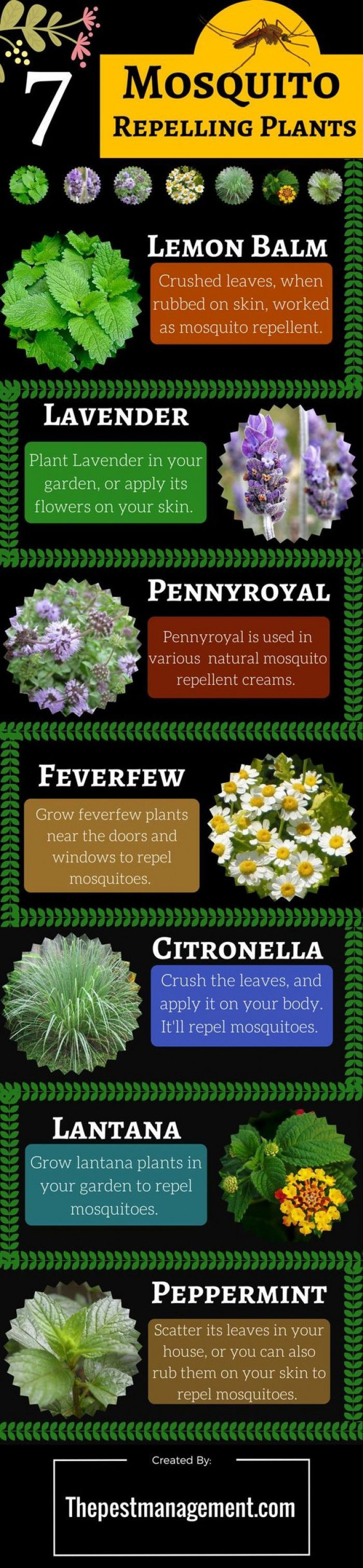 7 Mosquito Repelling Plants To Get Rid Of Mosquitoes From ...