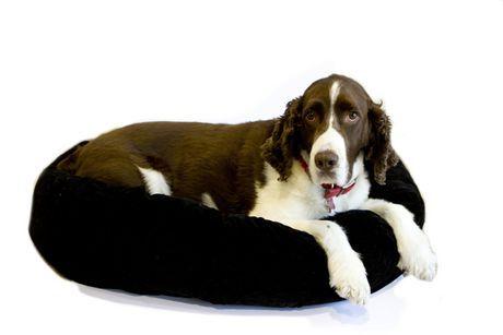 Remarkable Danazoo Danawares 34X24 Black Cuddler Dog Bed Black L In Inzonedesignstudio Interior Chair Design Inzonedesignstudiocom