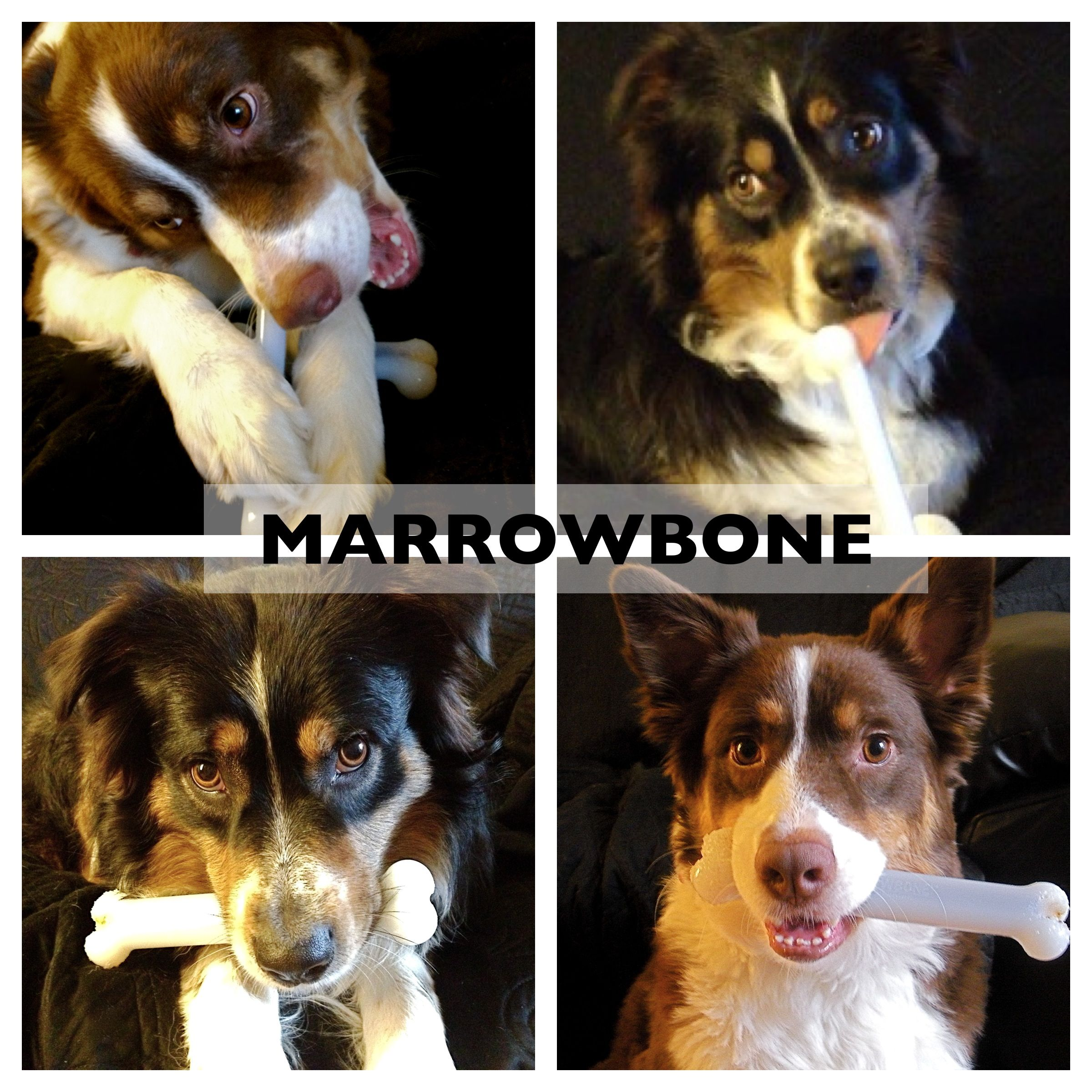 Yuppie Puppy Marrowbones Are Aussie Approved