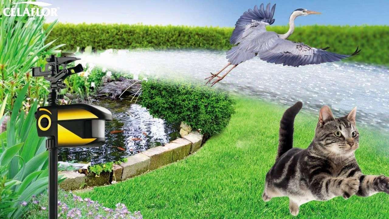 Luxus 44 Für Was Tun Gegen Marder Im Garten Garden Ideas Garden