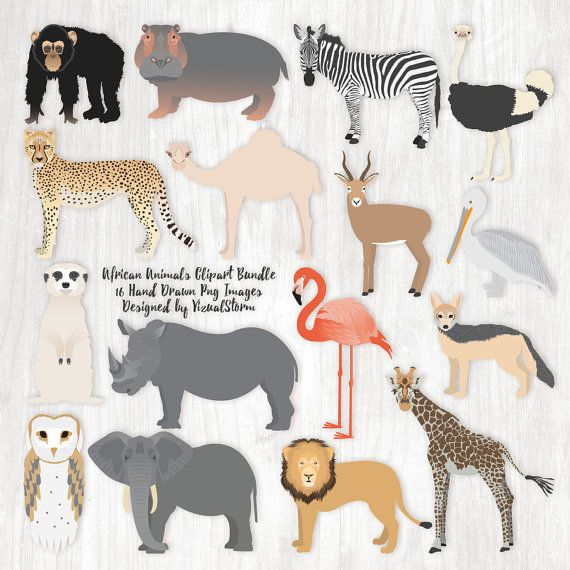 African Animal Clipart Wildlife From Africa 16 Png Safari Etsy Animal Clipart African Animals Animal Illustration