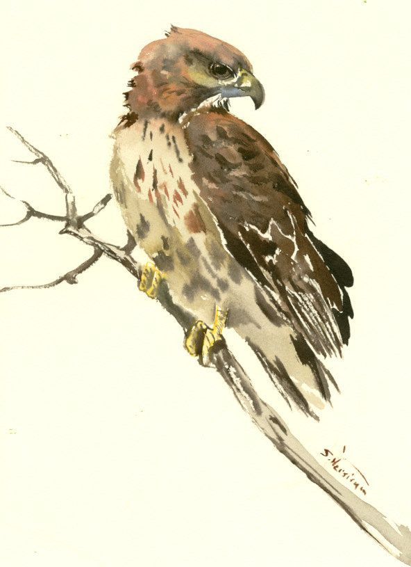 Hawk, Original watercolor, 12 X 9 in, Seahawk painting, illustration ...