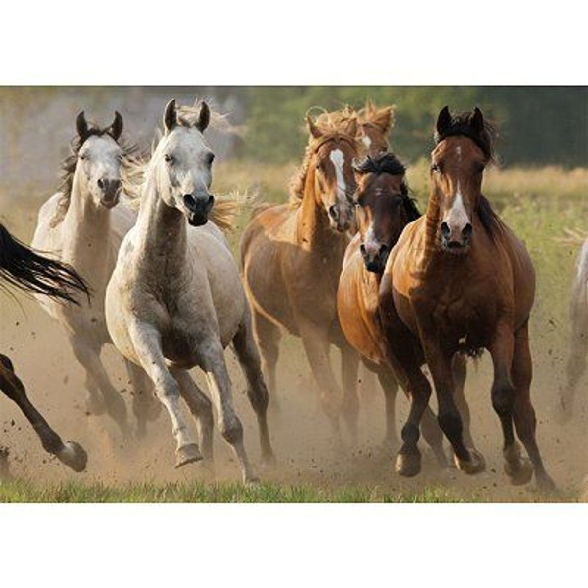 Horde De Chevaux Sauvages Rav87561 Taille Taille Unique Chevaux Sauvages Beaux Chevaux Animaux