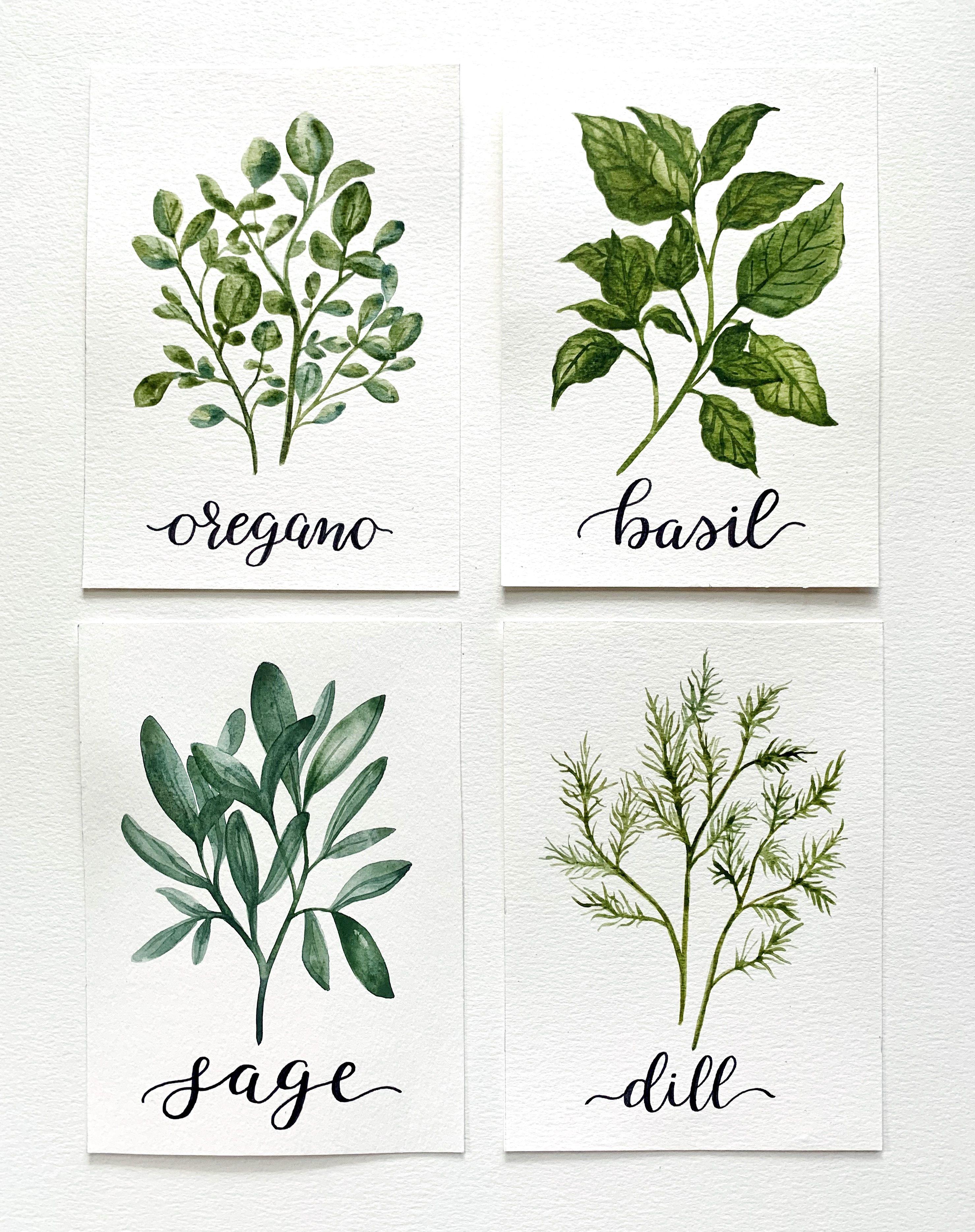 Watercolor herbs painted by The Fleur Wreath #herbs #gardening #herbgarden #botanicalwatercolor #watercolorart #painting