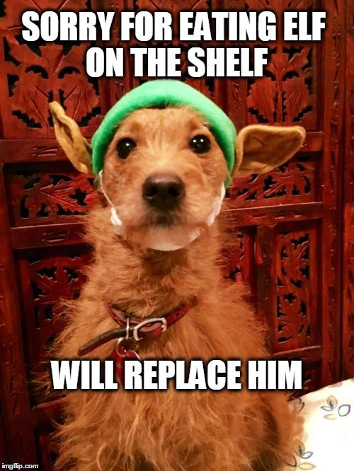 Sorry For Eating Elf On The Shelf Sorry For Eatingelf On The Shelf Will Replace Him Https Imgflip Com I W1 Christmas Dog Funny Dog Memes Christmas Memes