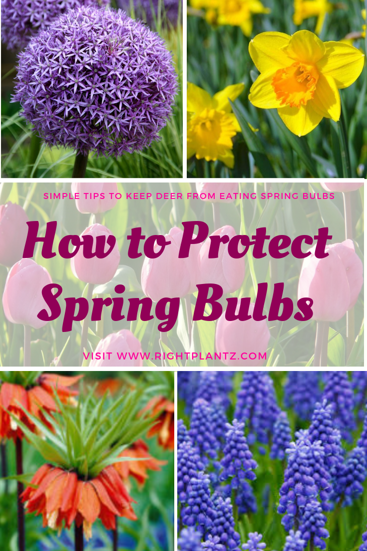 How To Protect Spring Bulbs From Animals I Spring Bulbs