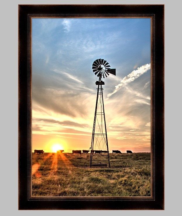 Black Angus cattle and windmill western art photo or canvas, western ...