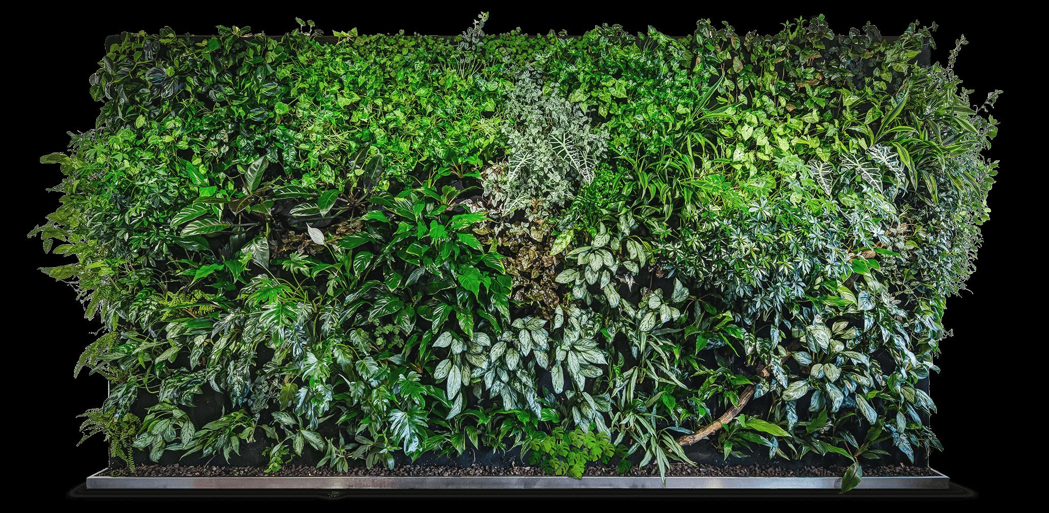 Grune Wande Florawall Green Wall Backyard Garden Design Green Wall Design