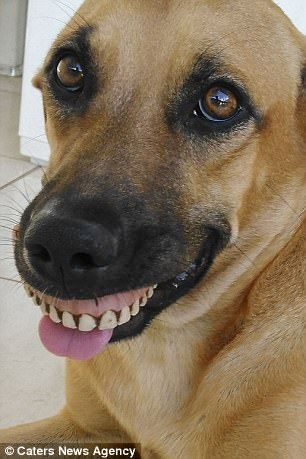 Dog Ends Up With Hilarious Grin After Finding False Teeth Dogs