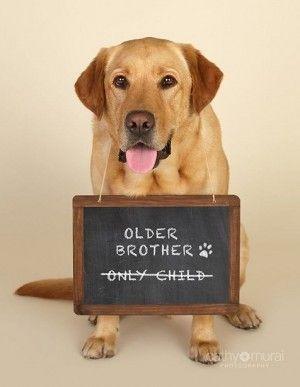 perros anunciando24
