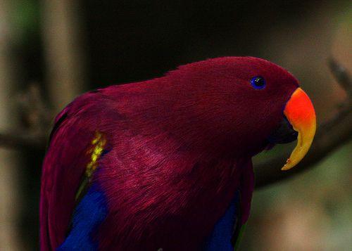 صور طيور نادره منتديات بغدادي الحبيبه Parrot Pet Birds Beautiful Birds