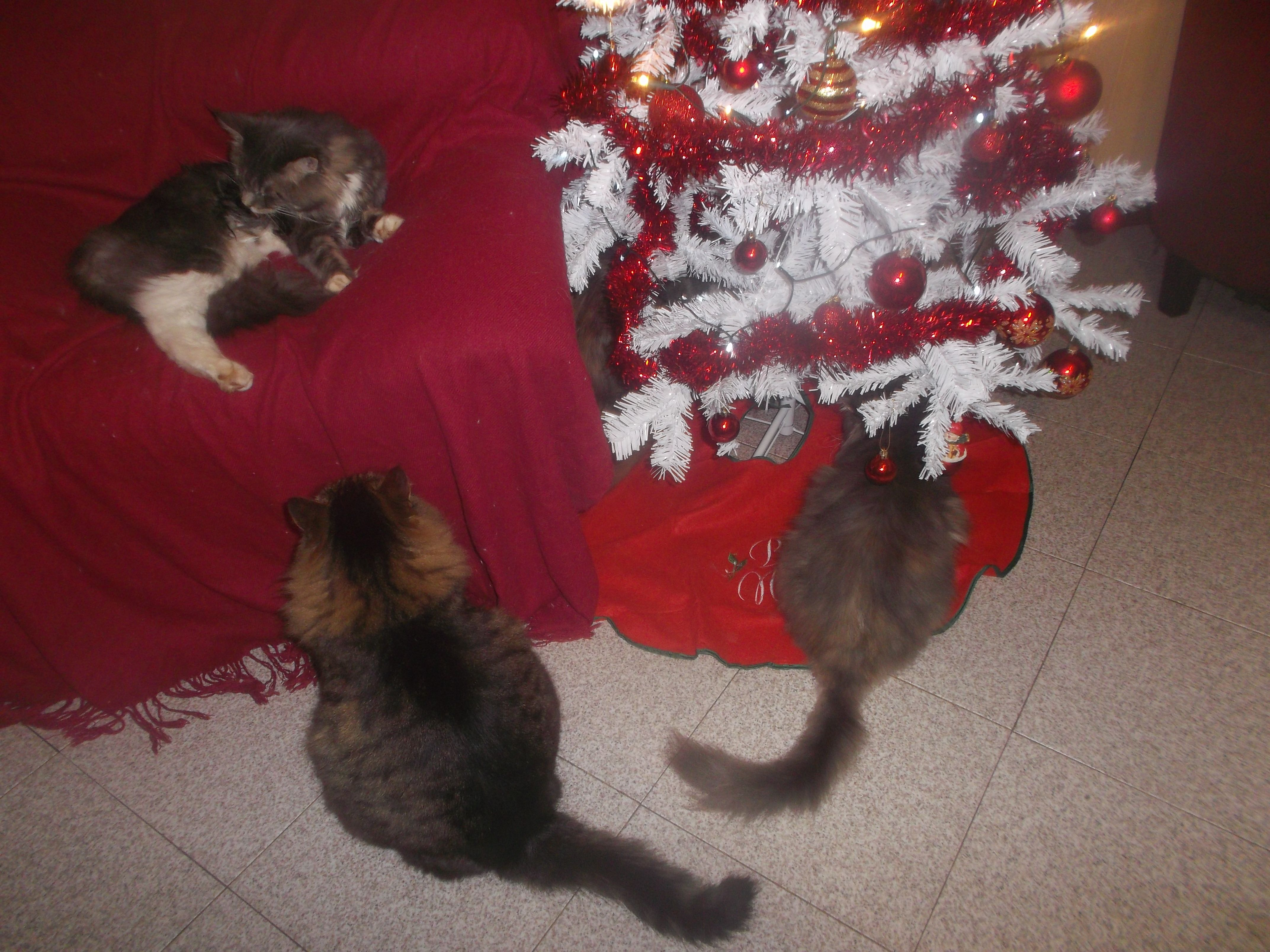 My adorable cats!!!!!