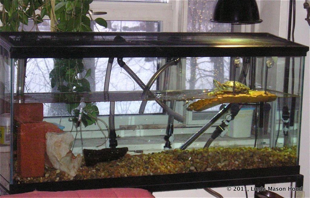 red eared slider tank ideas Google Search Fish tank