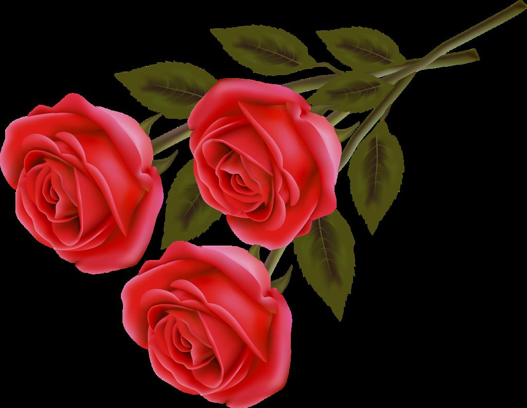 Картинка трех роз