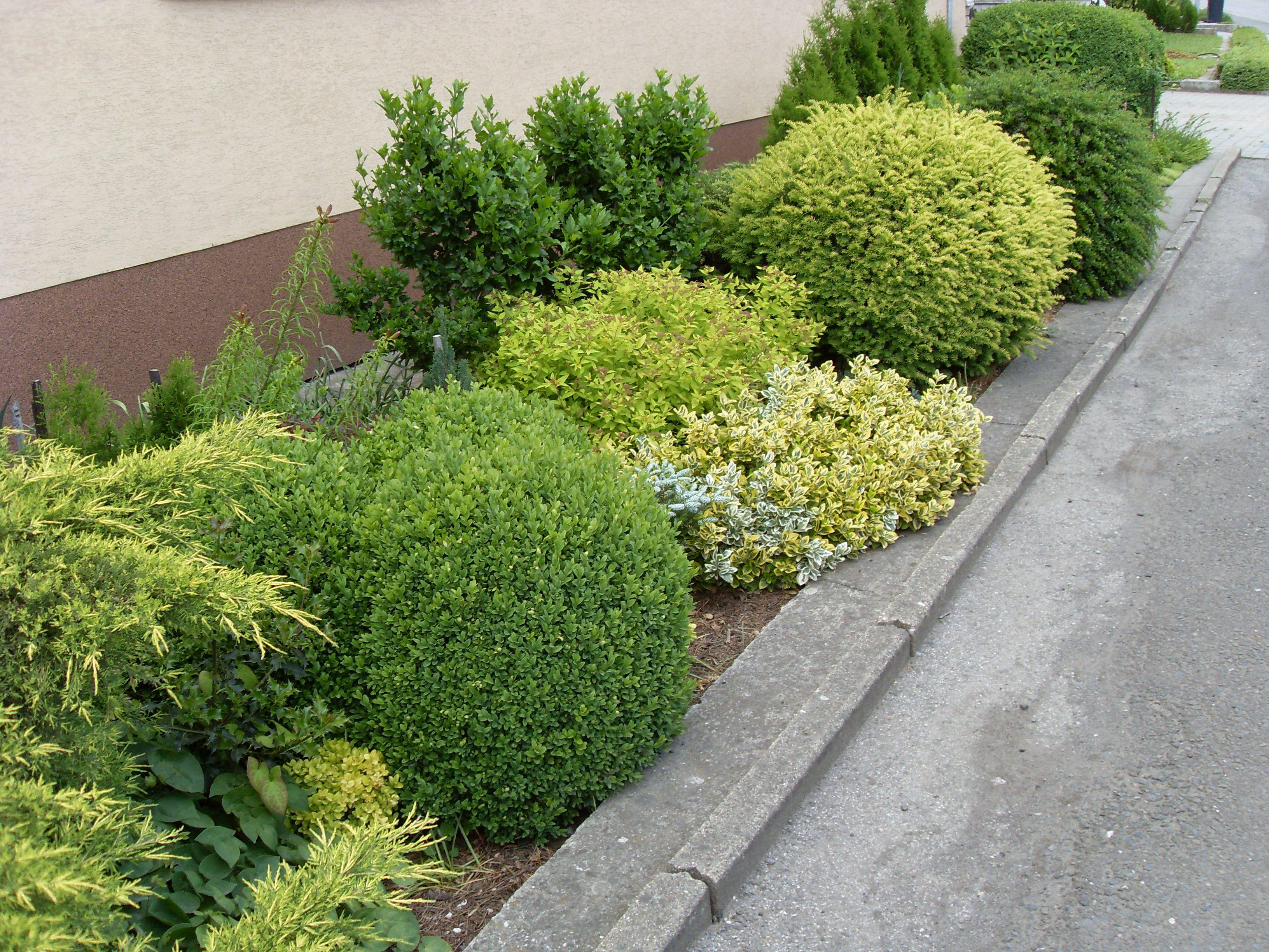 Zeleň před domem