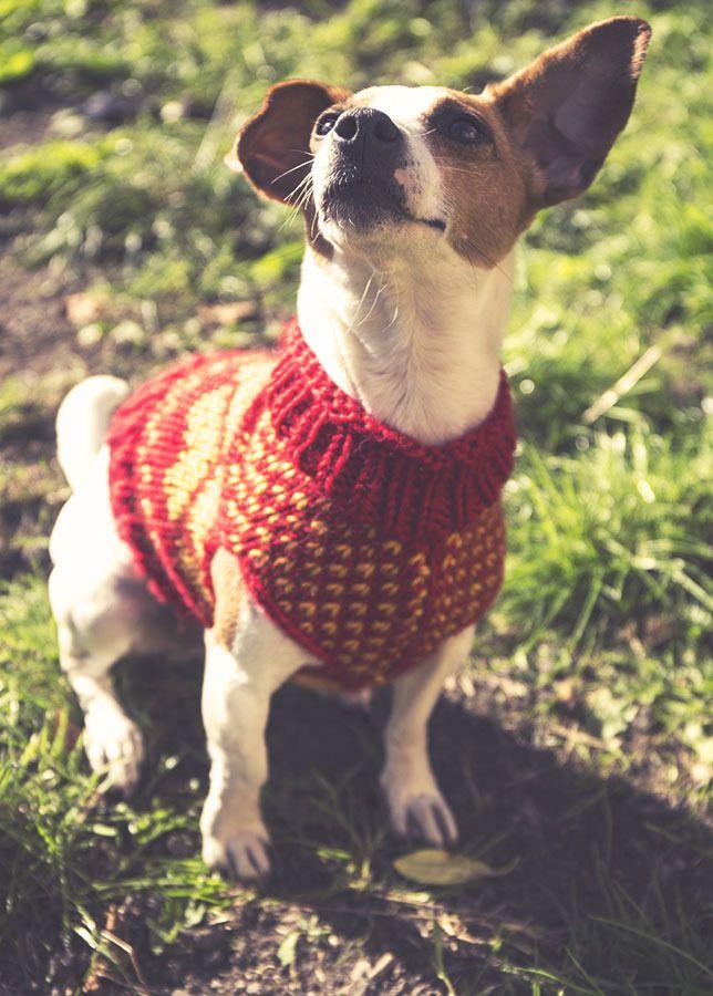 Bonito Sencillos Patrones De Punto Suéter Del Perro Libre Colección ...