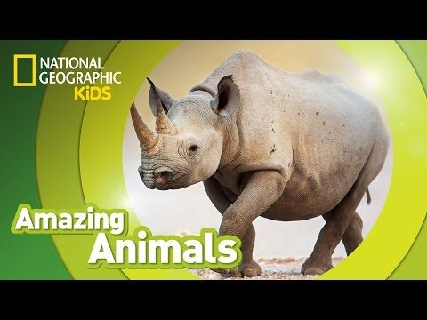 Black Rhino | AMAZING ANIMALS - YouTube | Topics - Wild