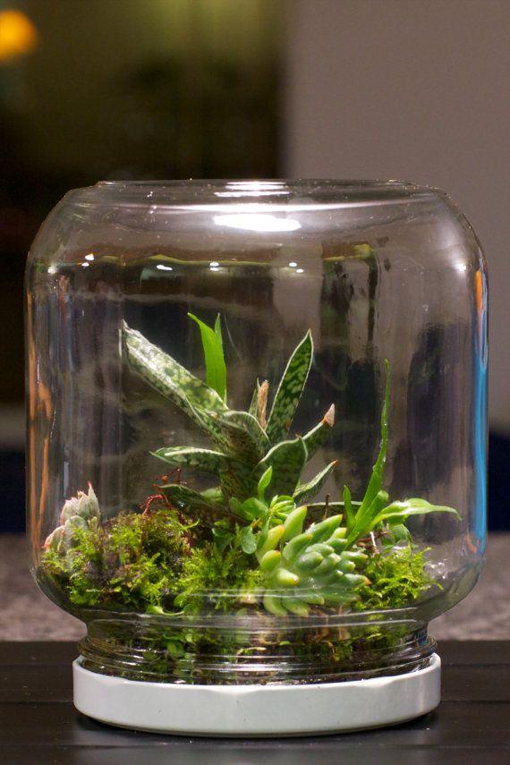 Terrarium Made From A Mayo Jar Green Thumb Pinterest Terrarium