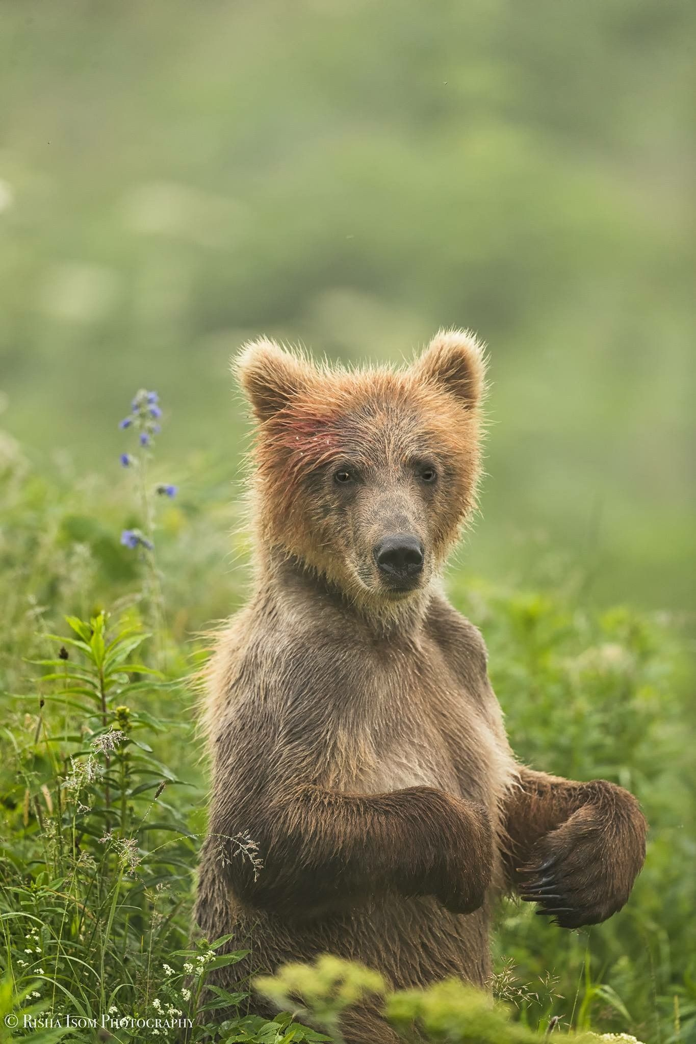 Darling Bear With Images Spirit Animal Bear Baby Animals