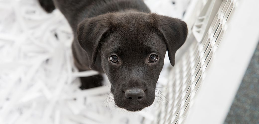 No Pet Store Puppies Day Is Tuesday, July 21 in 2020 Pet