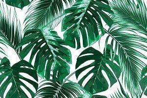 Palm Tree Leaves Tropical Wallpaper Aesthetic Desktop Wallpaper Leaf Wallpaper