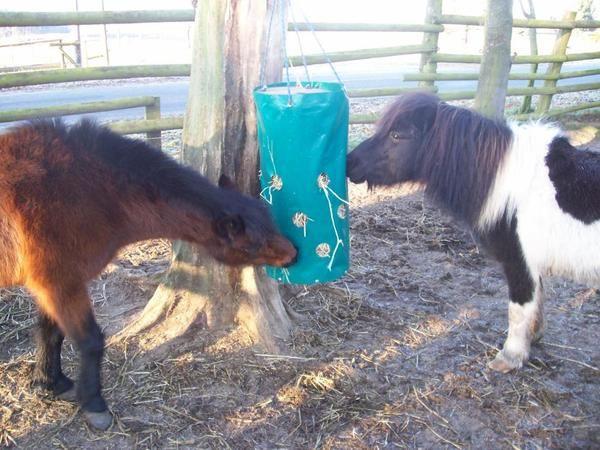 Futter spiel gegen langeweile pferd kuh beschäftigung