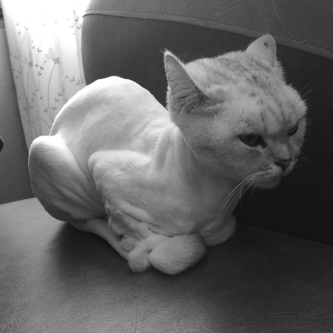 Eto Bylo Zimoj Sezhushozyajkoj Lyublyutebya Cat Littlecat Winter Cold Notclothes Eto Bylo Zimoj Sezhushoz With Images Trading Strategies Cold Winter Forex Trading Strategies
