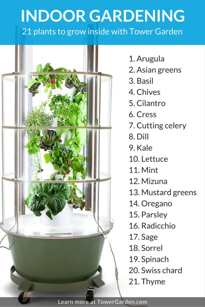 Pin On Indoor Home Gardening Tips Ideas