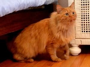Adopt Casey Declawed On Petfinder Tabby Cat Cat Care Tabby