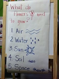 TK TSGI Sensory and Communication Preschool: What do plants need ...