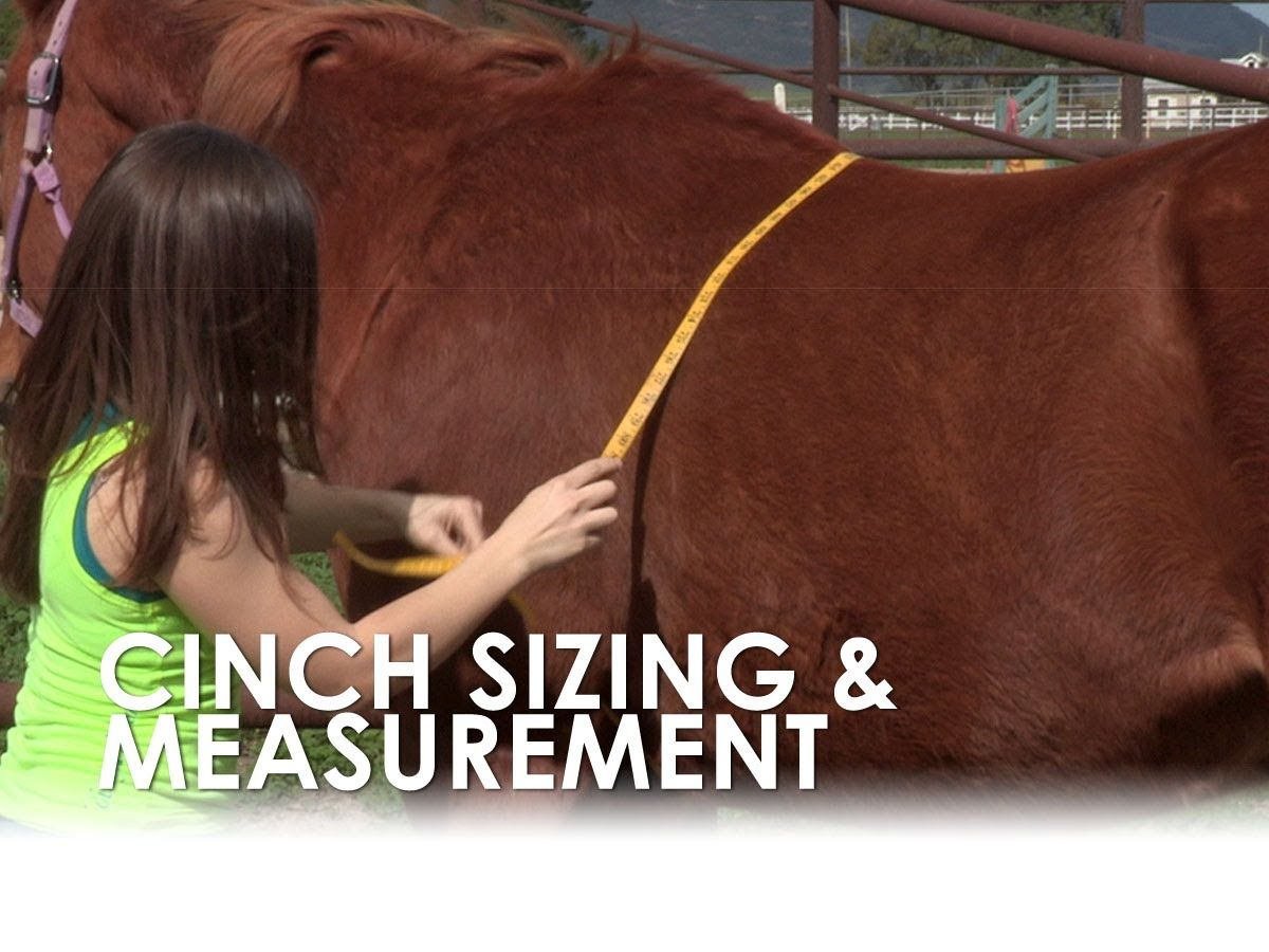 How to measure for a horses cinch size horses horse