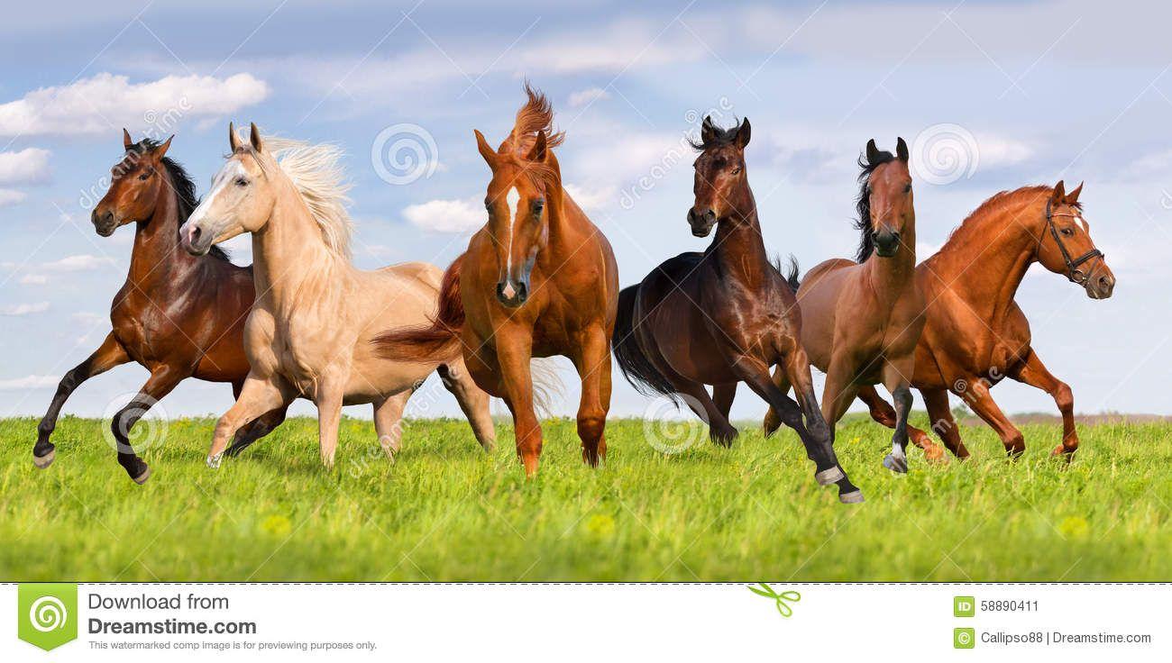 Cool Wallpaper Horse Spring - a66a4b1a905352cf83a051ad1ad85c76  You Should Have_854848.jpg