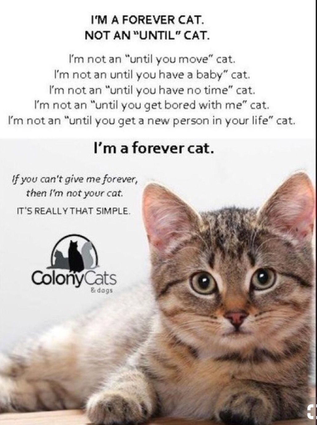 Pin By Turtle Farm Fabrics On Cat Lover Cats Feral Cats Baby Cats