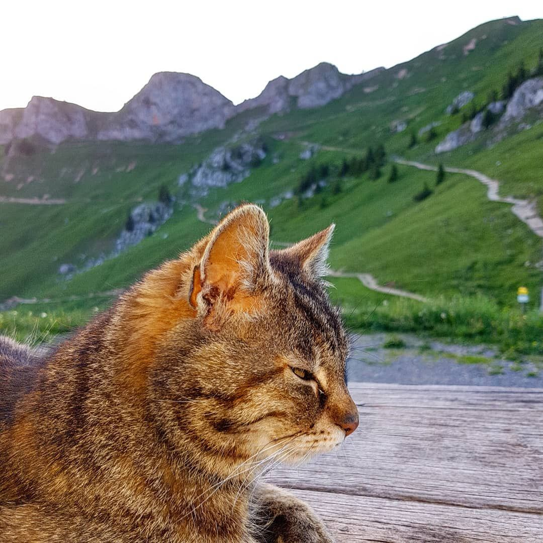 how much to declaw a cat uk