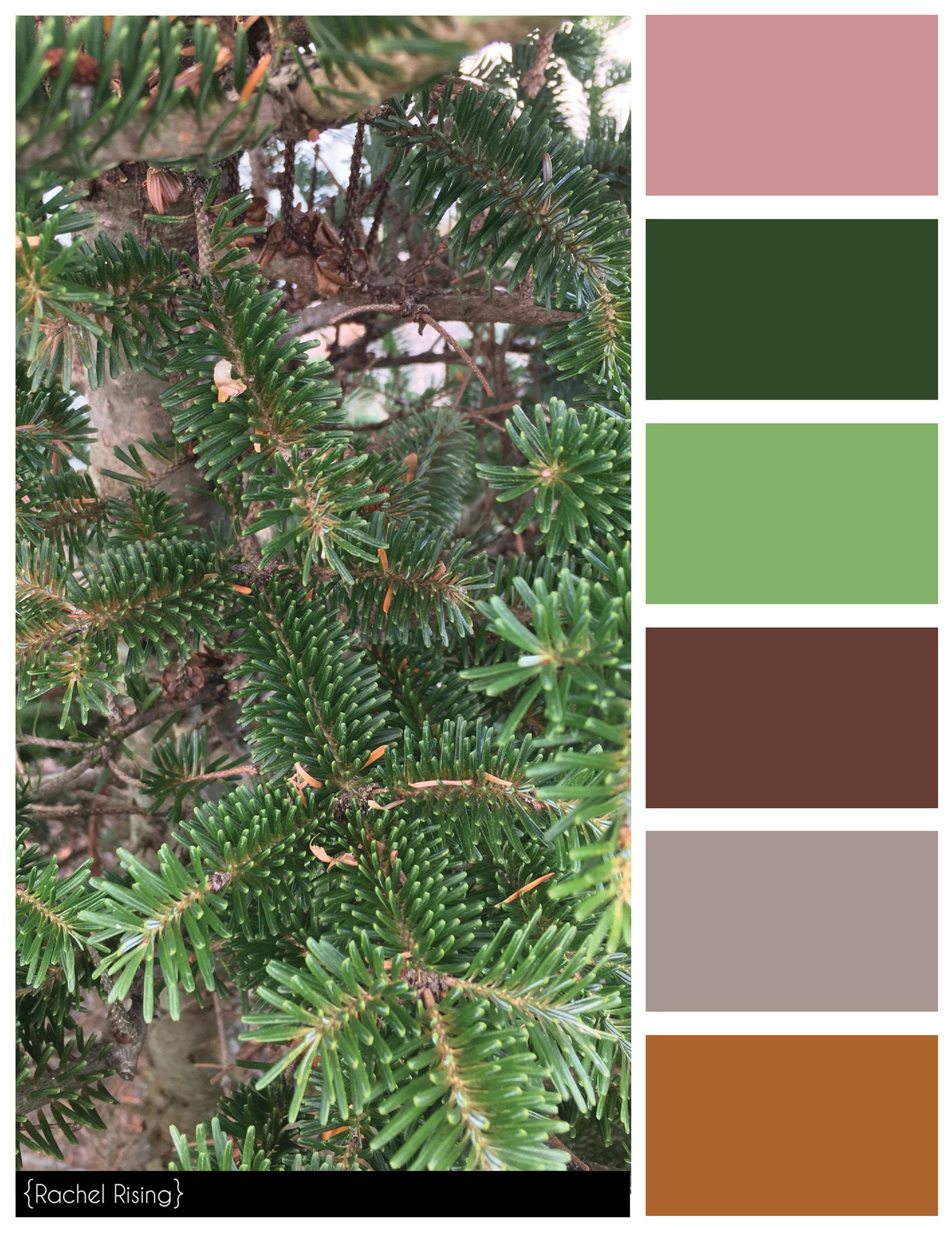 Pine Color Scheme #colorscheme   Rkaye Color Schemes   Pinterest ...