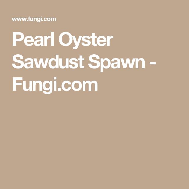 Pearl Oyster Sawdust Spawn | back yard mushrooms