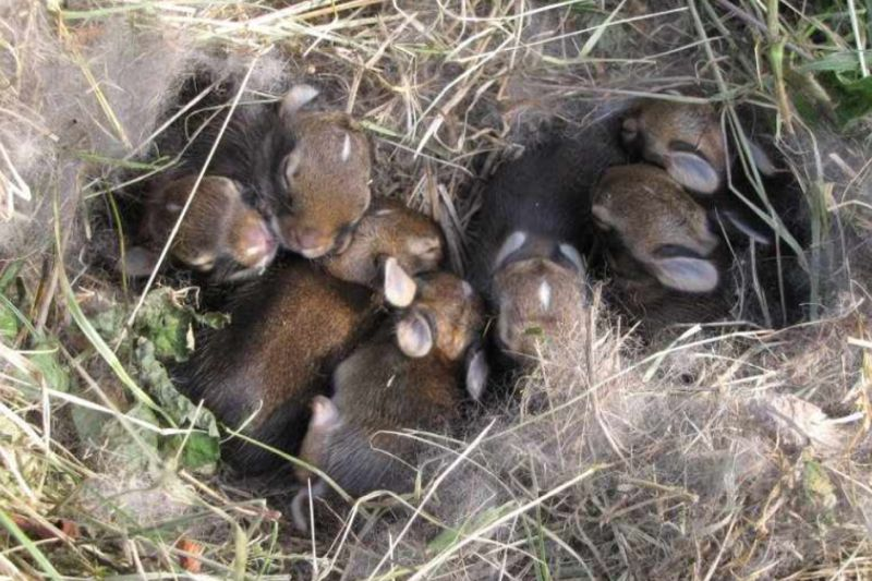 Baby bunnies! My son found this on Reddit, whatever that